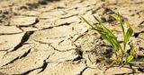 Фермеры отложили посев пшеницы, почва высохла на 2 метра в глубину