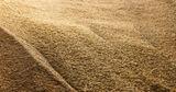 Резервная пшеница Гагаузии: материалы дела будут проверены дополнительно