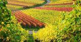 Власти Франции добавили 76 миллионов евро на поддержку виноделов