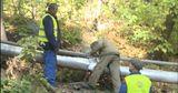 Дерево, рухнувшее на машины на Телецентре, планировали срубить