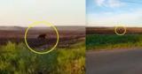 В Румынии на поле вблизи Ботошан удалось снять на видео медведя