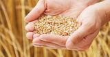 Эксперт: Молдова достаточно обеспечена зерном, социальный хлеб не подорожает