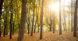 Лесной фонд Молдовы будет обеспечен высококачественным репродуктивным материалом