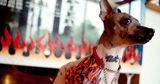 Власти Рио-де-Жанейро запретили делать животным пирсинг и татуировки