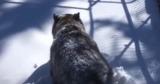 В Канаде сняли на камеру момент пробуждения медведя от спячки