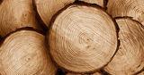 Древесные кольца подтвердили климатические изменения