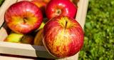 Диетолог рассказала о роли яблок в профилактике рака