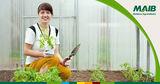 MAIB: Привлекательные кредиты для сельхозпроизводителей Ⓟ