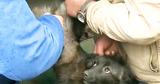 В Молдове завершается вакцинация домашних собак против бешенства