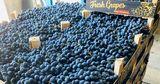 Эксперты: Стратегия длительного хранения винограда в Молдове не работает