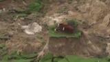 Землетрясение в Новой Зеландии превратило 3 коров в островитян