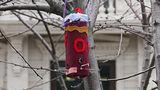 Рядом с парком Валя Морилор установили необычные кормушки для птиц