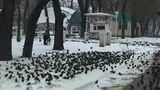 В Одесской области аномальное нашествие скворцов