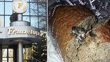 """""""Франзелуца"""" прокомментировала фотографию с мышью в хлебе"""