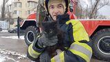 В Кишиневе развернулась целая спецоперация по спасению кота