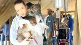 Ветеринары из США провели стерилизацию сотен бездомных собак в столице