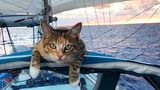 Путешественница и её кошка стали звездами в Instagram
