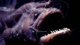 Морской чёрт впервые попал в объектив видеокамеры