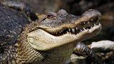 Бывший змеелов организовал домашний зоопарк в Унгенах