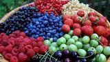 Самой популярной ягодой в Молдове является клубника