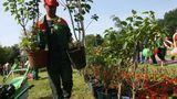 Завтра в Кишиневе пройдет день озеленения
