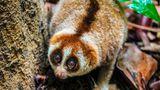 Veninul, ucigaș și medicament: Cinci animale veninoase nebănuite