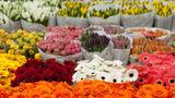 Немеренко: Кишиневу нужно больше киосков для продажи цветов