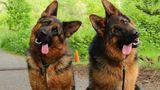 Любовь к собакам оказалась обусловлена генетическими факторами