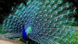 В Бельцах пройдет выставка декоративных птиц