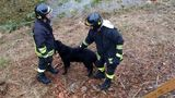 В Сети появилось видео спасения собаки из-под завалов в Италии
