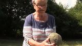 Старушка вышла в сад и нашла метеорит