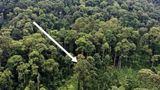 მეცნიერებმა მსოფლიოში ყველაზე მაღალი ტროპიკული ხე აღმოაჩინეს