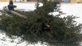 Новогоднюю ель в Чадыр-Лунге демонтировали позже обычного