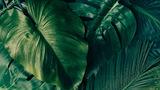 Генетики обнаружили элементы, отвечавшие за выход растений на сушу