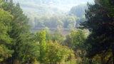 Молдова попала в топ стран, отстающих по разделу лесов