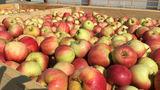 Директор агрофирмы: В РФ хотят купить в 20 раз больше, чем урожай за год