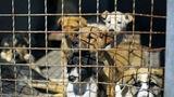 ცხოველთა დამცველები: ძაღლების მასობრივი ხოცვა იგეგმება