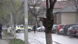 О бомбе в прокуратуре Бельц сообщил бывший военный