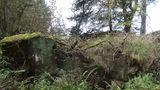 После освобождения Молдовы немцы еще три года прятались в лесах