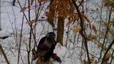 Caprioare se zbat în lațuri puse de braconieri în România