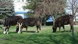 Vacile au luat cu asalt Aleea Clasicilor din Parcul din Bălți
