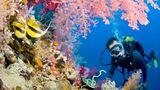 Ученые обнаружили кораллы, способные выжить в губительных условиях