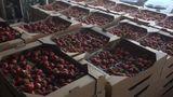 Фрукты, овощи и мясо на сумму более 200 тысяч леев задержали таможенники