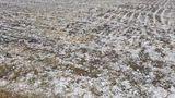 В селе Кунича района Флорешть градом побило 100 га садов