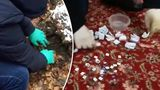 В Кишиневе задержали группу наркоторговцев