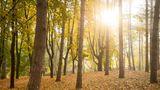 Сегодня в Молдове ожидается малооблачная погода без осадков