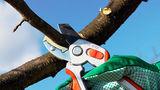 В понедельник на улицах Кишинева пройдет чистка деревьев