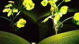 В MIT создали «цветы-светлячки» для освещения домов будущего
