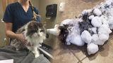 В США замерзшая под снегом кошка отогрелась и ожила