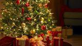 Cercetătorii avertizează: Bradul de Crăciun poate fi un pericol